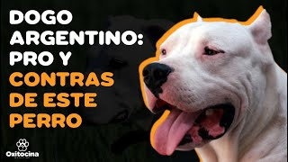 VENTAJAS Y DESVENTAJAS DE TENER UN DOGO ARGENTINO