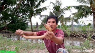Câu lươn đồng: Cận cảnh câu lươn khủng nhất là đây(weighing the worst eel sentence is here)