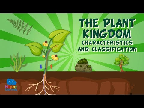 The Plant Kingdom: Characteristics And Classification   Educational Videos For Kids