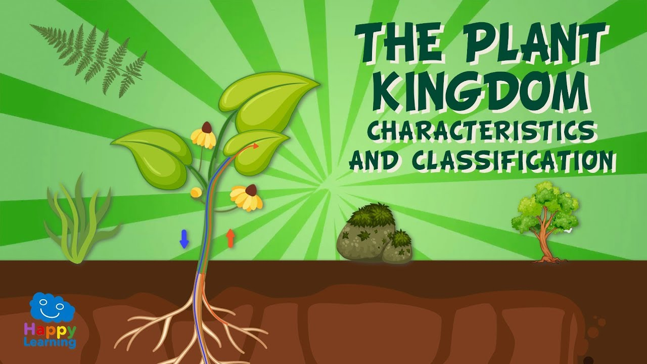 The Plant Kingdom: Characteristics and Classification   Educational Videos  for Kids - YouTube [ 720 x 1280 Pixel ]
