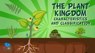The Plant Kingdom: Characteristics and Classification | Educational Videos for Kids