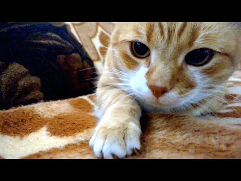 Things Cats Do Without Realizing They Are Being Adorable