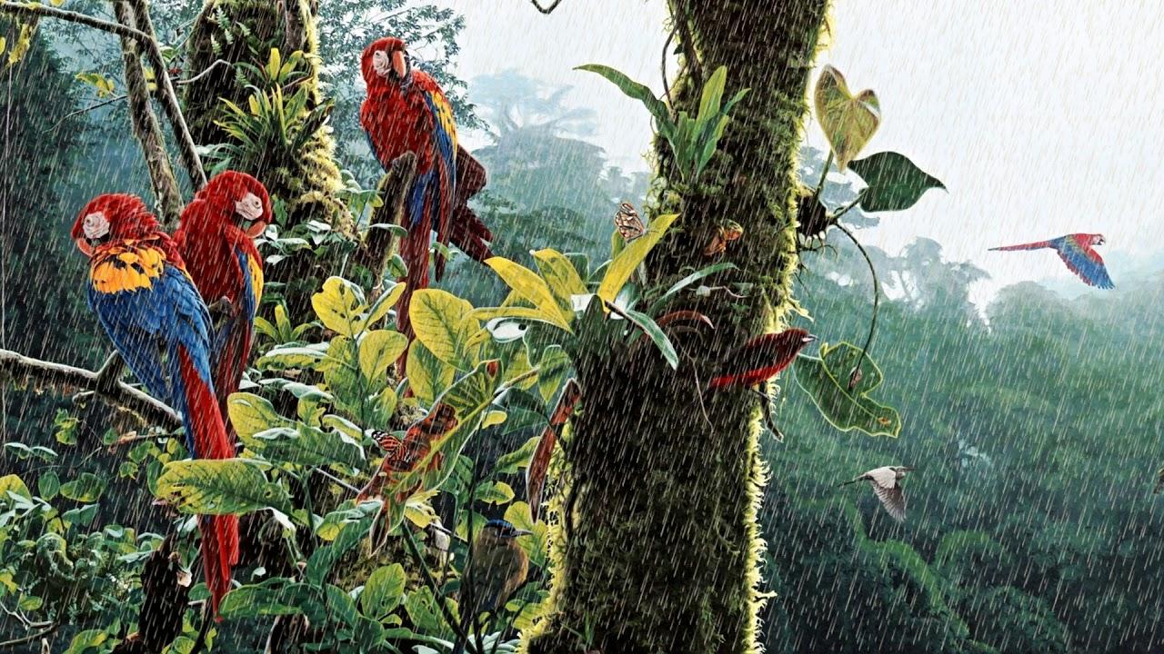 Rainforest Birds Sounds (1 Hour) Jungle Rain with Tropical Birds
