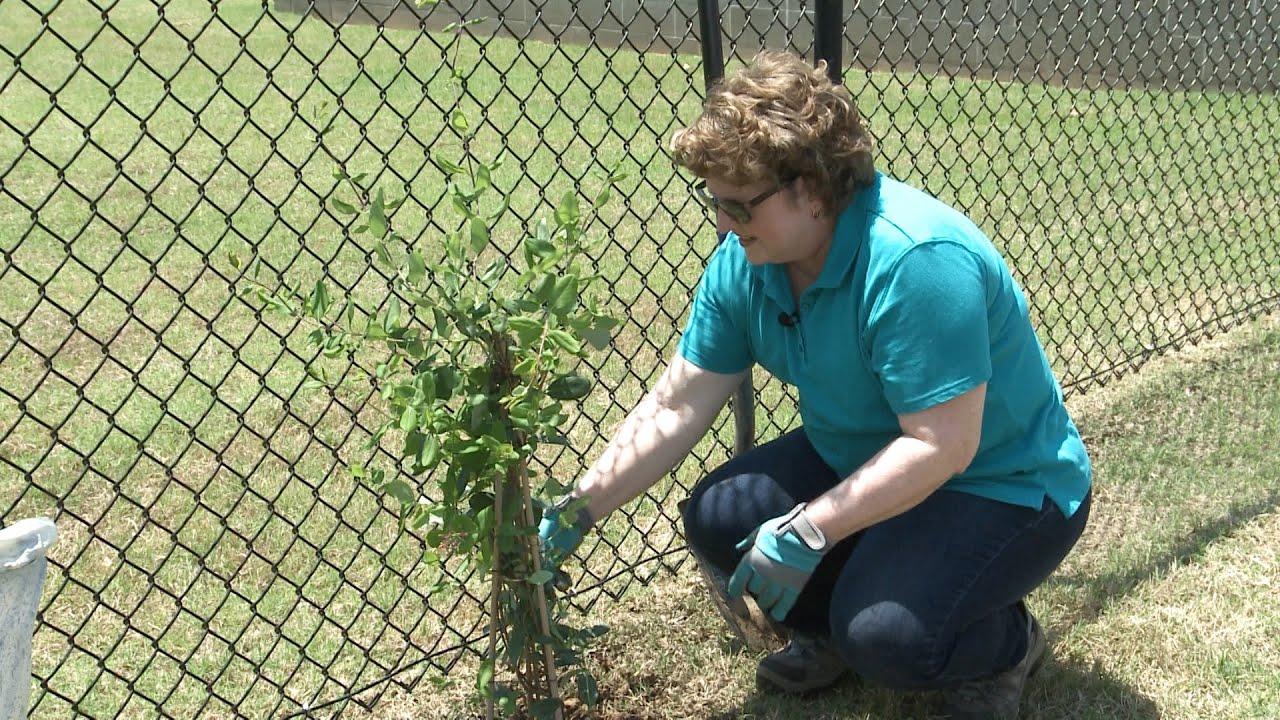 Planting Garden Vines Family Plot Youtube