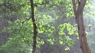 The Rain Raga Intention Experiement
