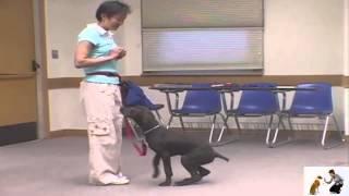 Dog Workshop Demo: Say Please By Sitting