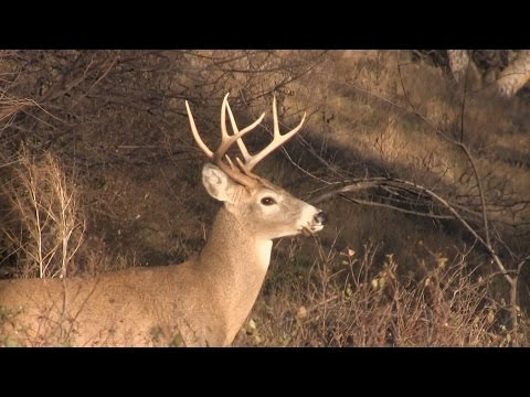 October Whitetails: Hunting The Three Phases