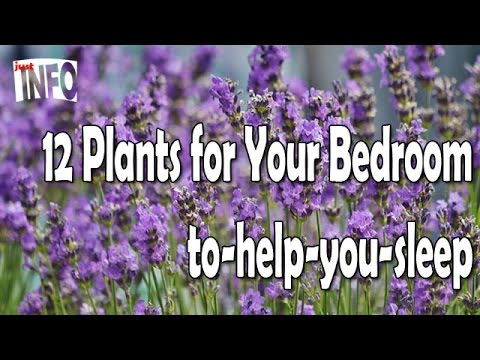 12 plants for your bedroom to help you sleep youtube - Plants that help you sleep natures soothing effect ...