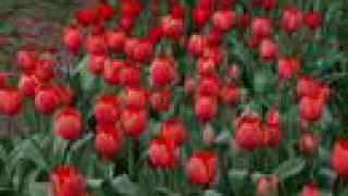 Tamil Christian Song - Isravele Bhayapadathe (Melody) - Praise The Lord - (Vol 1)