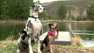 Funniest Commercials 20 - Funny Dog Commercial Subaru Forester