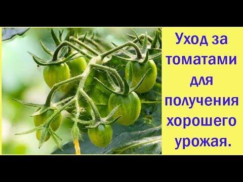 Уход за томатами для получения хорошего урожая. Сад и огород выпуск 265