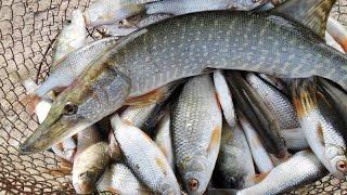 Клёвое место  Рыбалка на Москве реке  Бронницы