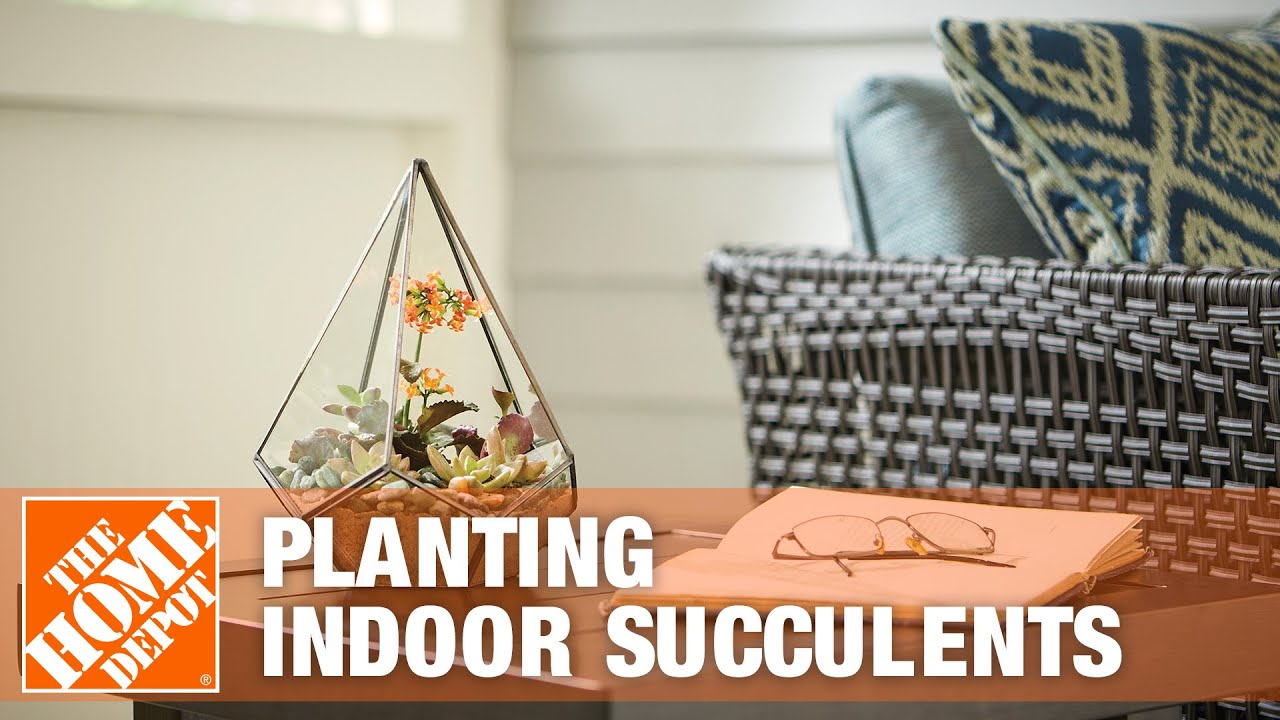 Indoor Succulents Tips And Tricks