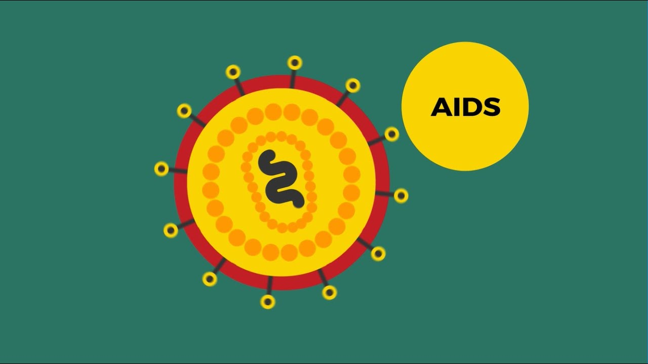 What are HIV and AIDS? | AVERT