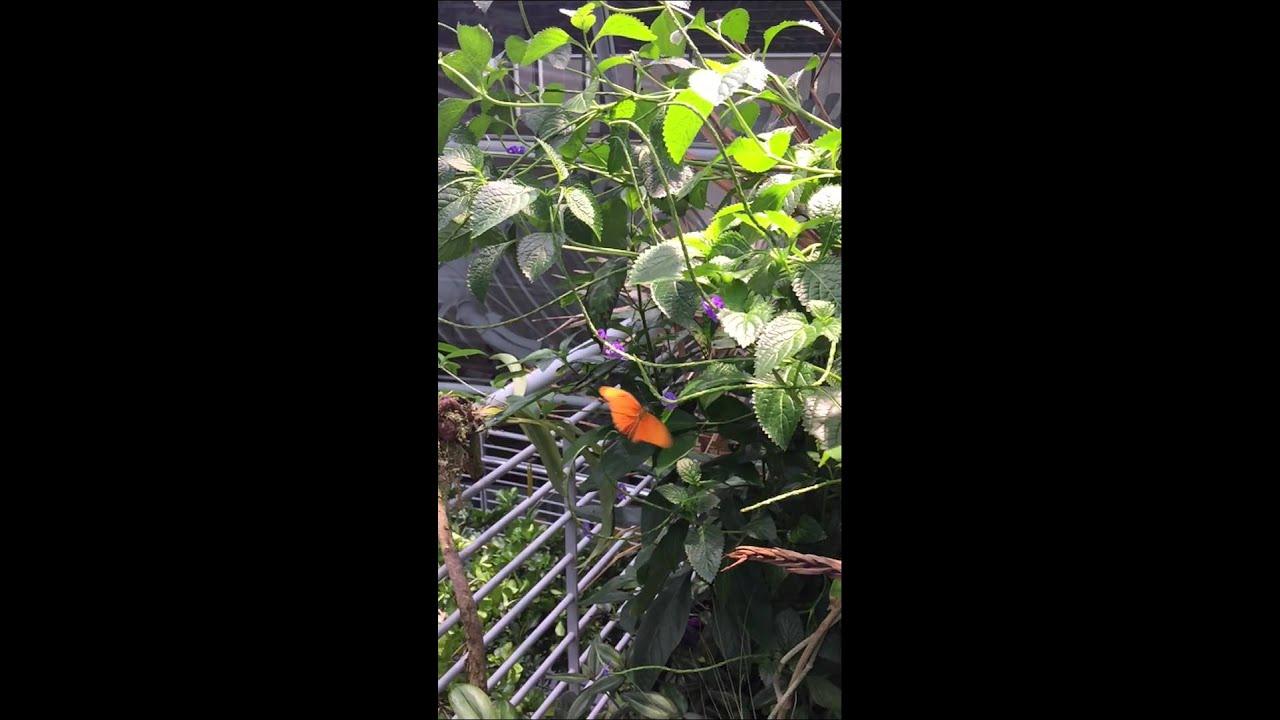 Slo mo butterfly