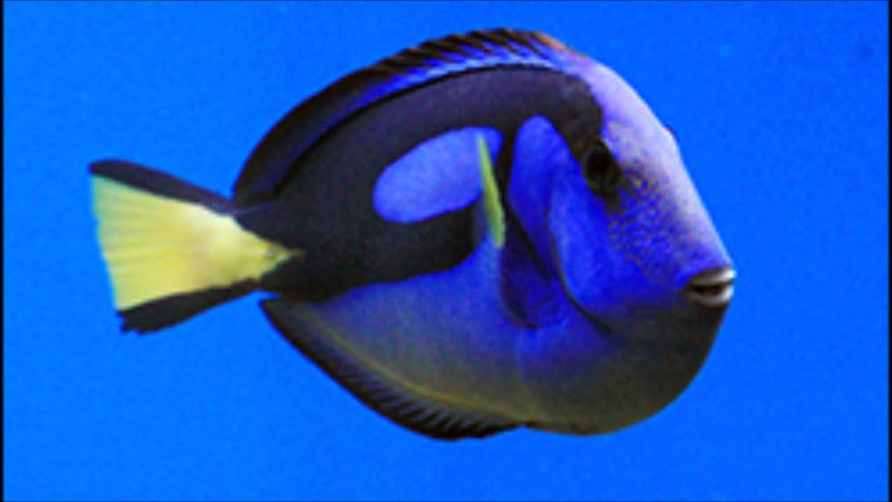 Peces Marinos Para Principiantes Real Fish Youtube