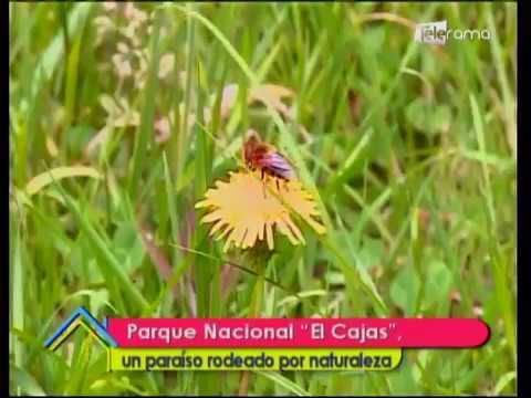 Parque Nacional El Cajas un paraíso rodeado por naturaleza