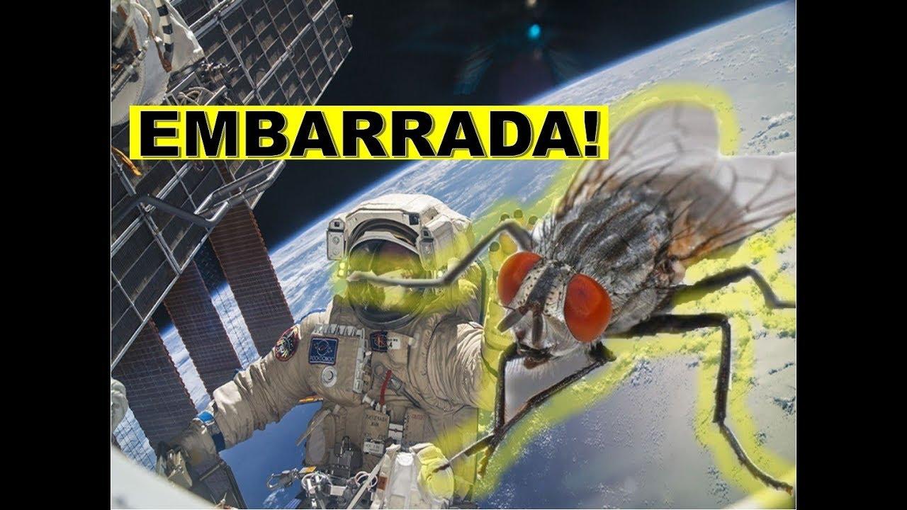 INCREIBLE EXPERIMENTO CON MOSCAS PRUEBA QUE LA NASA ES UN ...