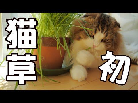 少食もふ猫に初めて猫草をあげたら反応は意外にも…!?