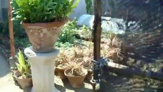 Plants Nursery Karachi - Stroll Plan