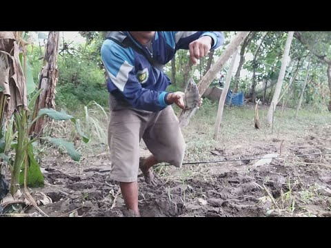 Penuh Perjuangan !! Mancing ikan Nila Spotnya berlumpur - Umpan rumput Disungai Wates Tulungagung