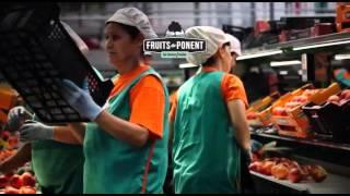 FRUITS DE PONENT, #LABONAFRUITA