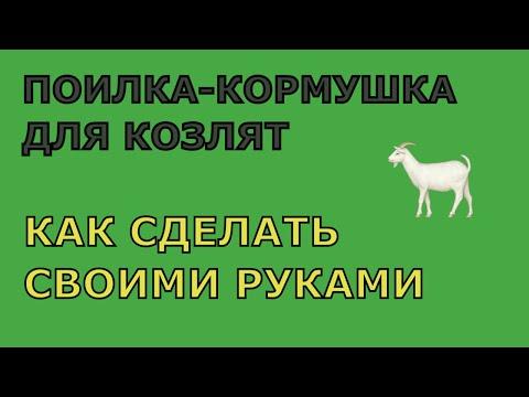 Как сделать удобную поилку для козлят, чтобы вас не измазали в молоке
