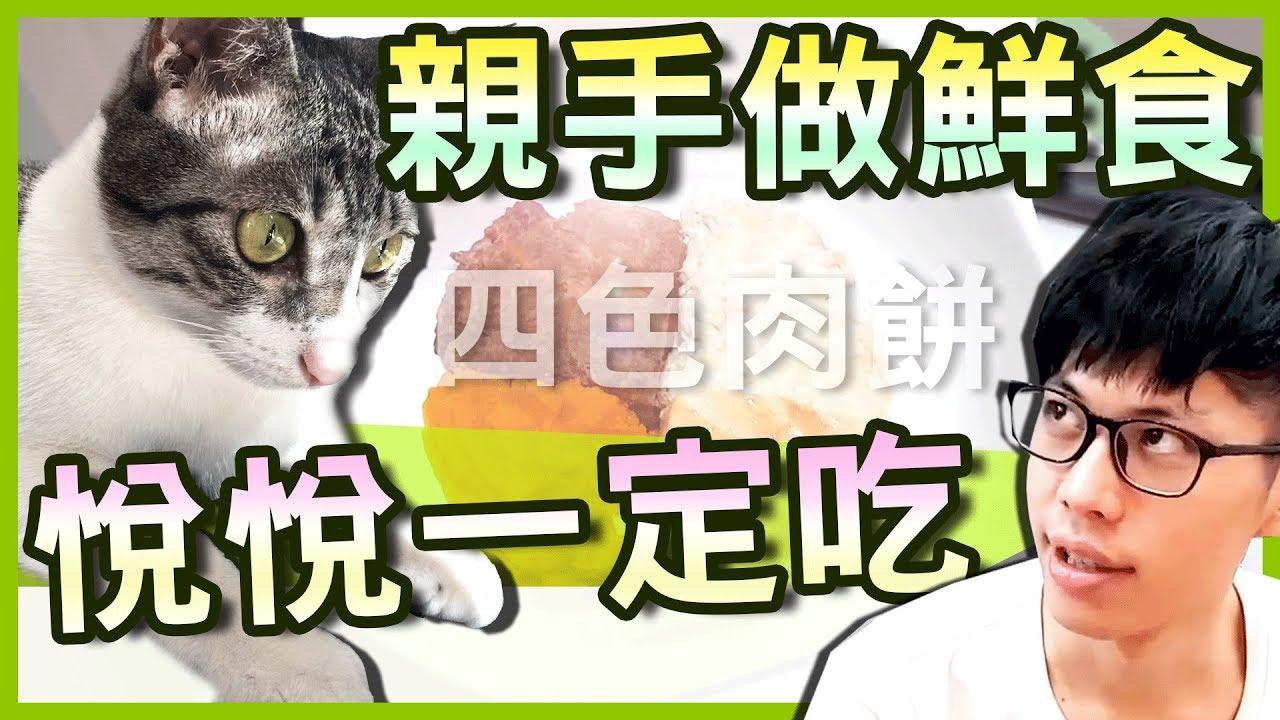 請問貓會捧場的機率是多少?|八毛 feat.老王 - YouTube