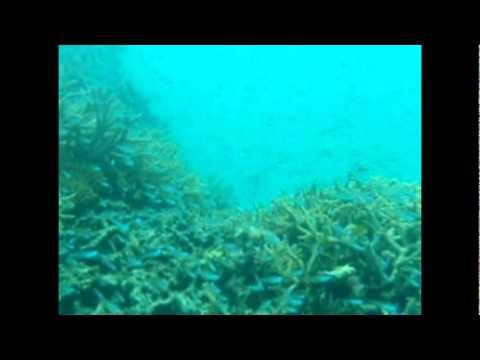竹富島沖のサンゴの根。小魚がいっぱい。