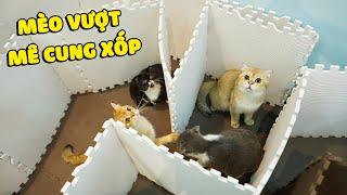 Mèo vượt mê cung bằng mút xốp
