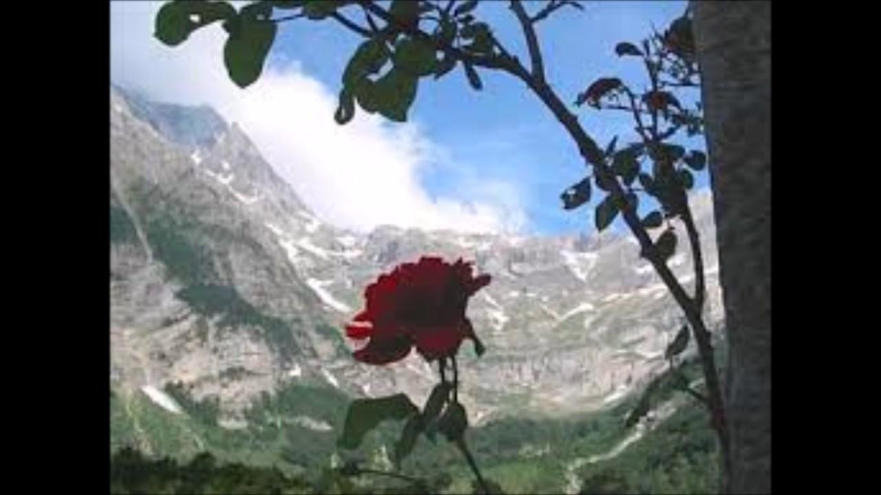 Yksi Ruusu On Kasvanut Laaksossa Sanat