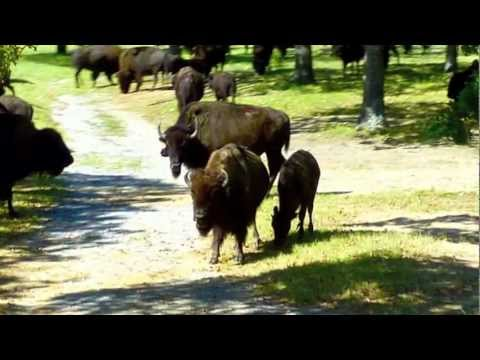 Woolaroc Museum and Wildlife Preserve