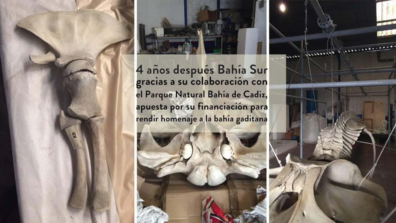 Descubre a la Ballena Bahía en BahíaSur - YouTube