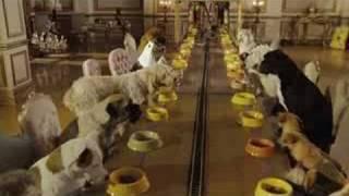 Hotel para perros pelicula