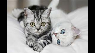 Самые милые и классные котята .Приколы💕💕💕