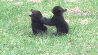Забавные животные Прикольное видео