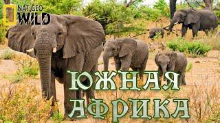 Дикая природа - Южной Африки. #Документальный фильм. National Geographic 12+