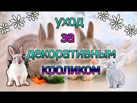 Вопрос: Как ухаживать за кроликом?