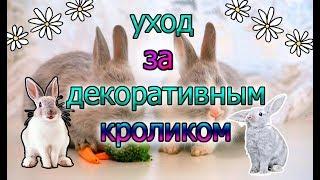 Как ухаживать за декоративным кроликом/уход за домашним кроликом