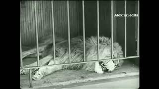 Charlie Chaplin In The Lion Cage - (Edit On Zindagi Ki Talaash Main Hum Maut Ke KitneAlok )