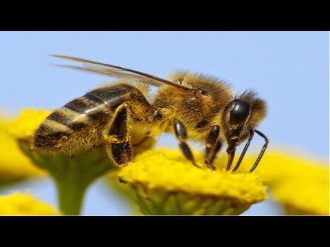 Planejamento e Implantação de Apiário - Como Vivem as Abelhas