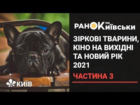 Телеканал Київ: Зіркові тварини Києва, кіноподорож на вікенд та новий рік в умовах пандемії ( частина 3)