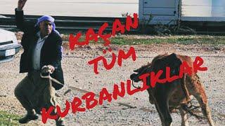 KAÇAN KURBANLIKLAR(Full Video)