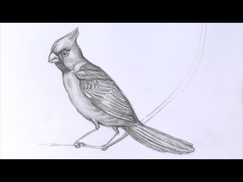 Уроки рисования. Как нарисовать птицу карандашом | Art School