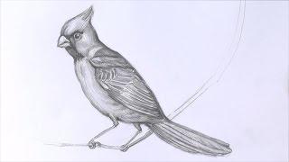 Уроки рисования. Как нарисовать птицу карандашом(Если вы не знаете, как нарисовать птицу, то мы вам в этом поможем! Для этого мы и подготовили этот замечатель..., 2014-10-28T13:24:24.000Z)