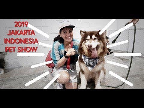 BERAPA HARGA ANJING LO? di Jakarta Indonesia Pet Show 2019