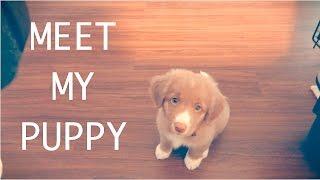 MEET MY PUPPY!
