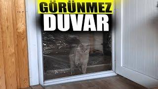 Kedilerim VS GÖRÜNMEZ DUVAR!!! Cats vs Invisible Wall
