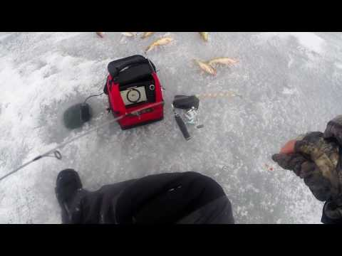 Devils Lake, ND Perch Jackpot