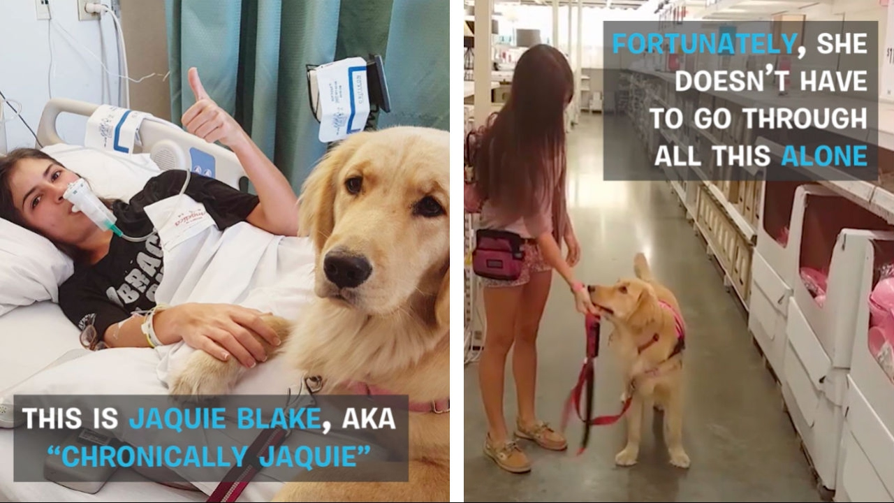 Service Pup In Training Makes Life Easier For Chronically Ill Human | DOGS  YOU SHOULD KNOW ABOUT